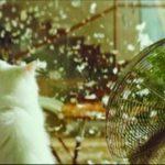 دوئل جاروبرقی و گربه